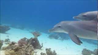 Дельфины и люди. Играем!