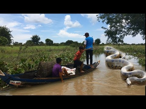 Thumbnail: Three Brother Release Big Snake at The Forest- Big Snake Attacked the Boy Near The Boat...Must Watch