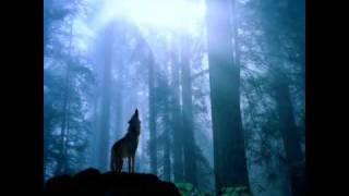 Sonata Arctica - Revontulet