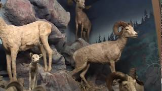 San Bernardino County Museum - Inland Empire Explorer