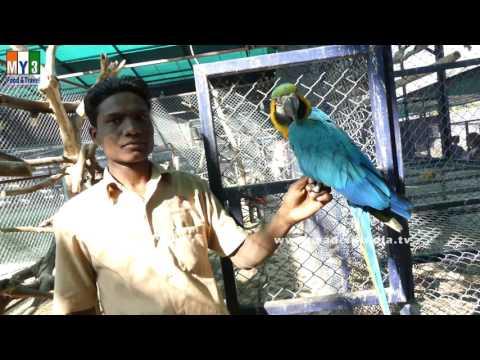 Black and Yellow Macaw | AMAZING BIRDS PARK | SHIRDI | MAHARASTRA |