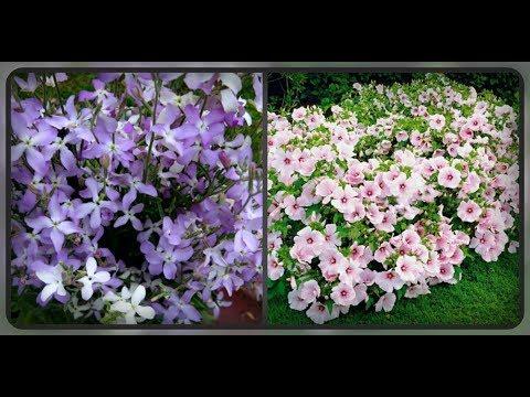 Цветы которые очень быстро растут