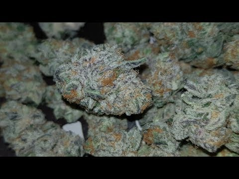 PURPLE PUNCH STRAIN REVIEW !!!