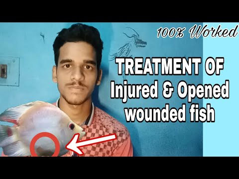 How To Save And Cure Wounded Fish