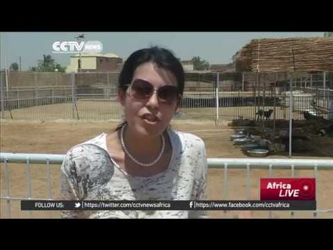 24221 governance 017 005 001 CCTV Afrique Cairo shelter provides safe haven for stray, unwanted anim