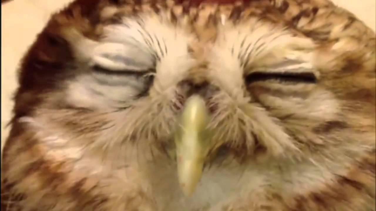 A Beautiful Friendship YouTube - Owlet kitten meet coffee shop become best friends
