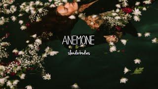 slenderbodies - anemone (Lyrics)