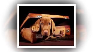 СЛУШАТЬ Детские сказки - Cказка о о домашних животных