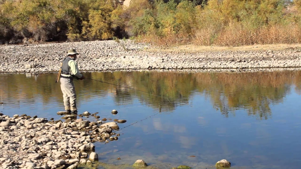 Fly fishing the salt river arizona for trout youtube for Arizona fishing regulations