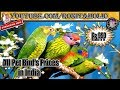 All pet birds prices in india parrots and parakeets mp3
