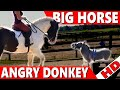 Big Horse vs Little Donkey