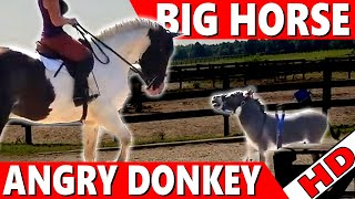 Download Video Big Horse vs Little Donkey MP3 3GP MP4