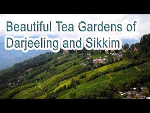 Travel Guide India Part 12 - Beautiful Tea gardens of Darjeeling and Sikkim
