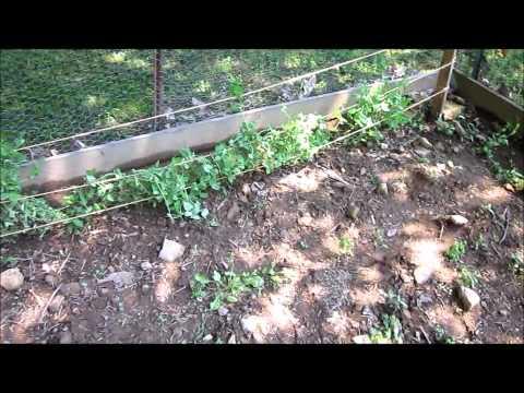 The Pennsylvania Gardener - July Update