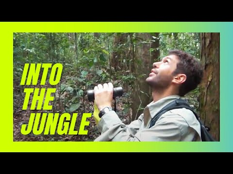 Into The Jungle - Indonesia Research and Travel Guide