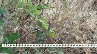 Samos 2013 - Ep.2 Island of Bugs(, 2013-06-14T17:57:44.000Z)