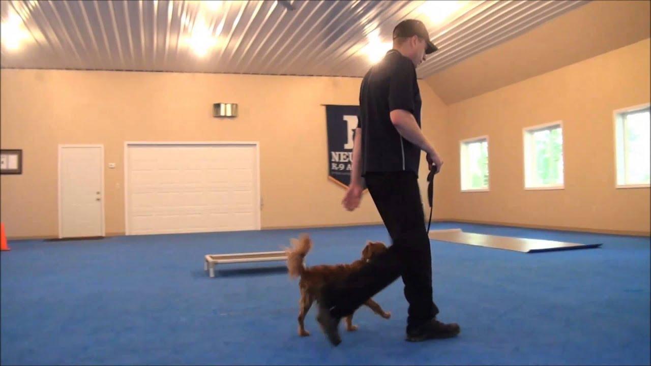 how to train a dog on a treadmill