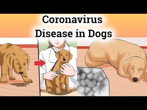 Coronavirus Disease In Dogs
