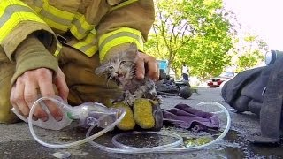 GoPro: Fireman Saves Kitten(Shot 100% on the HD HERO3® camera from   http://GoPro.com. Fireman Cory Kalanick rescues an unconscious kitten from a burning house filled with smoke., 2013-09-25T21:27:35.000Z)