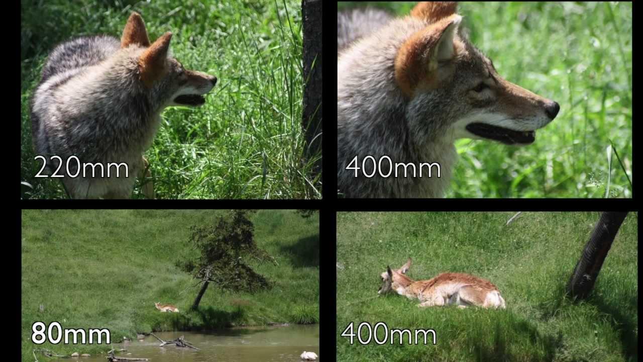 Tokina Lens 80400mm Photos handheld shooting on T3i