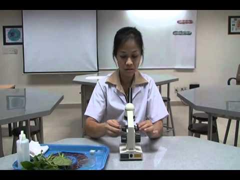 TSHOPS - Phương pháp quan sát tiêu bản tế bào thực vật qua kính hiển vi