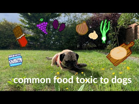common-food-toxic-to-dogs-*educational??*