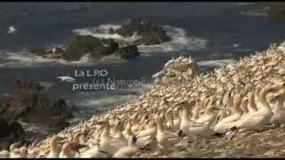 """Bande-annonce """"Un siècle pour les oiseaux"""""""
