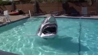 こんなん来たらビビるわ!シャークのアニマトロニクスの水上テスト走行