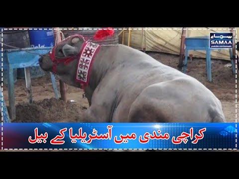 Karachi Mandi Mein Australian Bull | SAMAA TV |