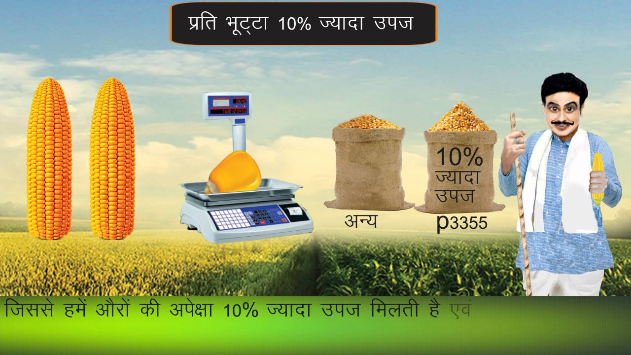 Gulabbagh maize market-cpf India Pvt Ltd by Gandrapu Srikanth
