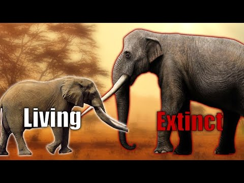 Elephant Size Comparison | A Brief History Probiscideans