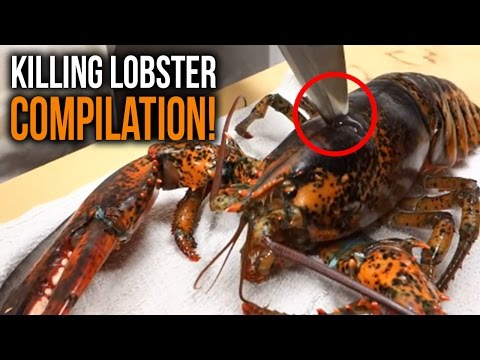 EXTREMELY GRAPHIC! KILLING LOBSTERS COMPILATION 2017
