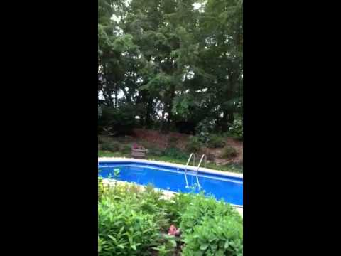 Bear visits our pool