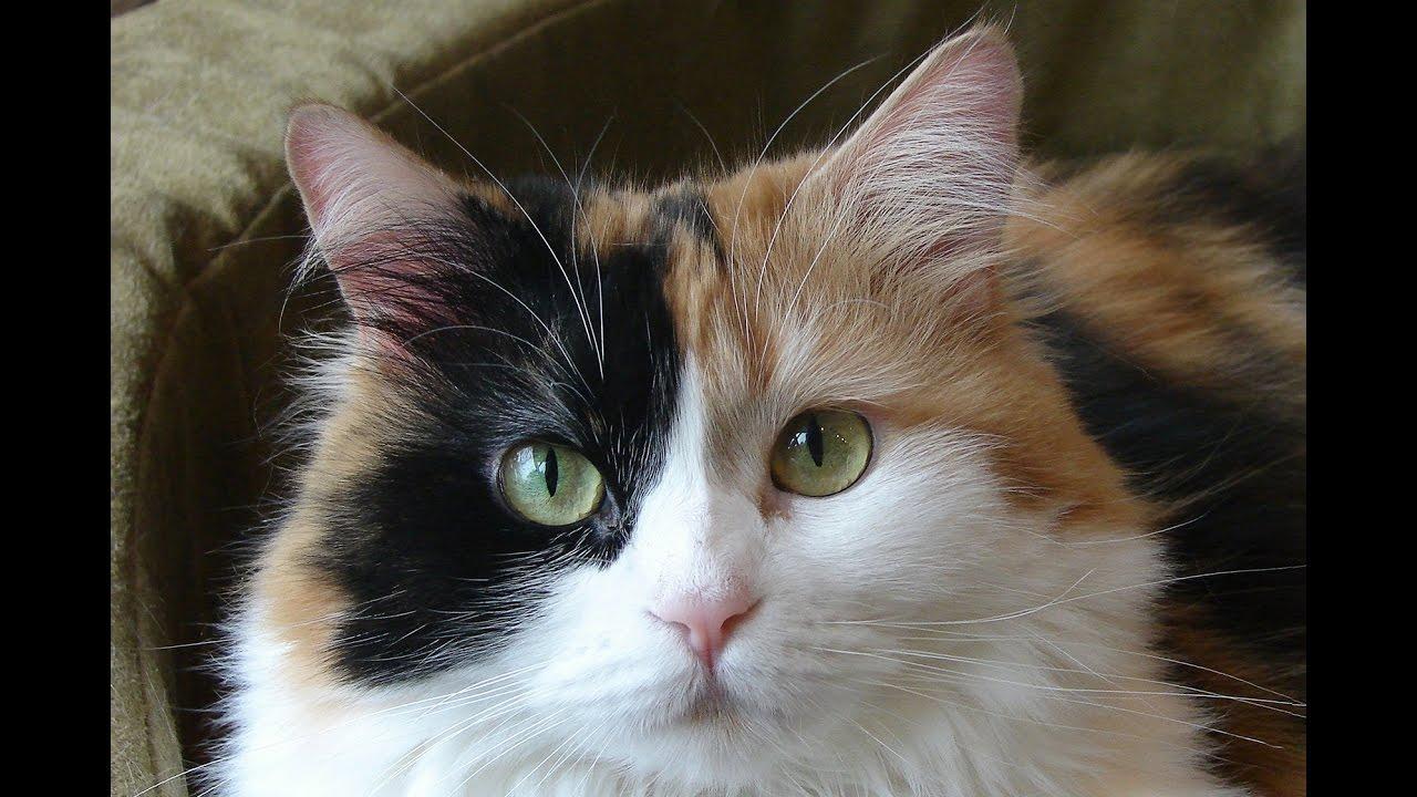 Кошка с котятами / Cat - YouTube