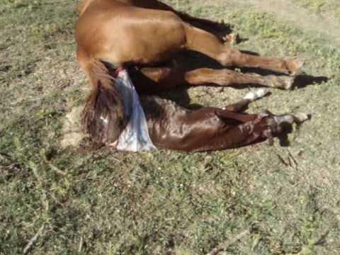 anabolicos para caballos precios