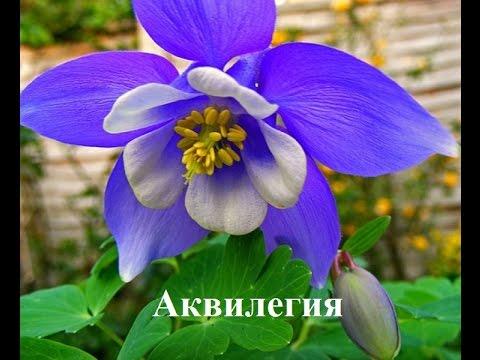 Что можно пасадить в тени Цветы в тени сада