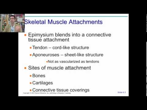 anatomy physiology chapter 9 part 1 - YouTube