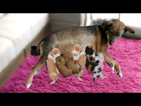 Dog Mating- Cute Dog Lover