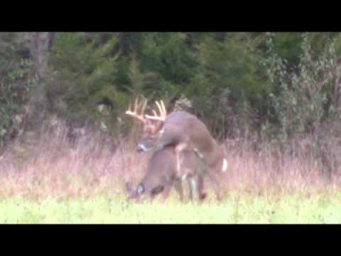 Hunter Waits Until Buck Breeds Doe — Deer & Deer Hunting Video