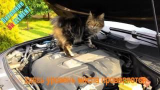 кот проверяет уровень масла в двигателе