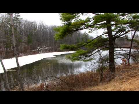FWR Dickson Wilderness Area Spring, North Dumfries Ontario