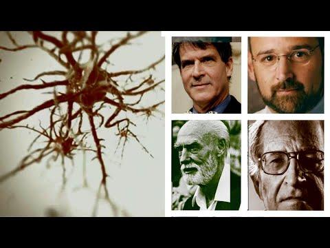 Doktori koji su otkrili začudjujuće činjenice o mozgu !
