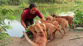 survival in the rainforest - woman  make home & cook crocodile for dog - Eating delicious HD