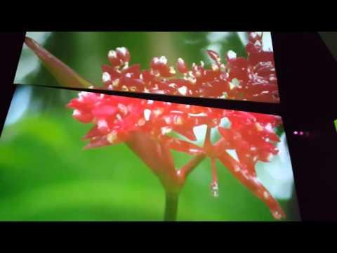 Historia del surgimiento de Panamá en 3D Biomuseo