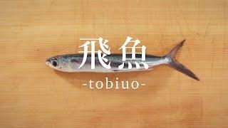 飛魚(とびうお)のさばき方 - How to filet Flying fish - 日本さばけるプロジェクト