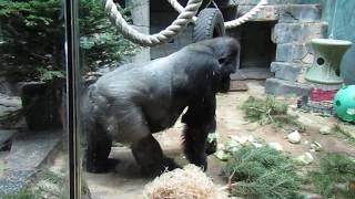 Видео про зоопарк в Москве