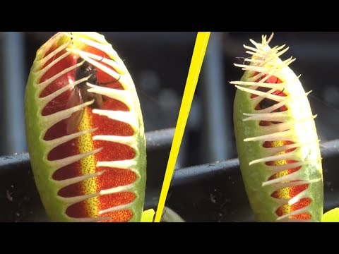 5 Most Terrifying Carnivorous Plants In The World!