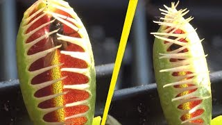 5 Most Terrifying Carnivorous Plants In The World! thumbnail