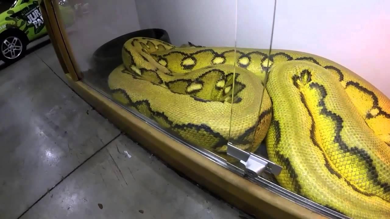 Pomona Reptile Show 2017