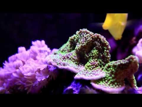 My reef aquarium - 120*60*60(H) cm - 370 litres (Music: Triangle Sun - Tonight)